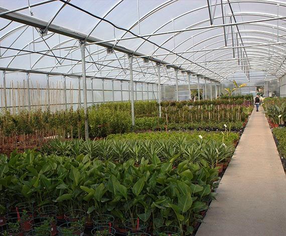 jardiner a benages vivero y servicios de jardiner a en
